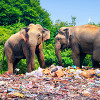 Plastic waste washes away